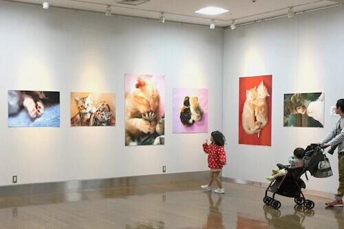 FH-関空LOVE猫写真展